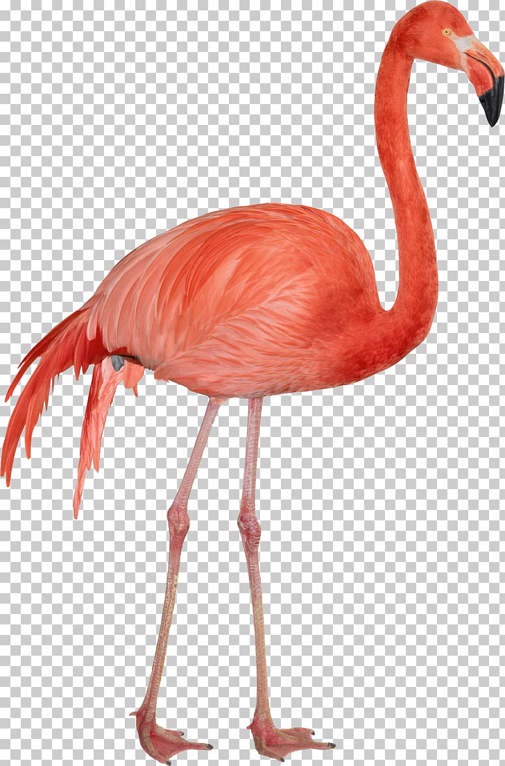 hight resolution of computer file flamingo pink flamingo photo png clipart