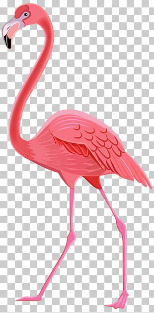 flamingo drawing flamingo flamingo