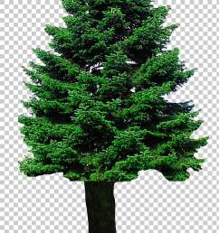 christmas tree christmas tree png clipart [ 728 x 1286 Pixel ]