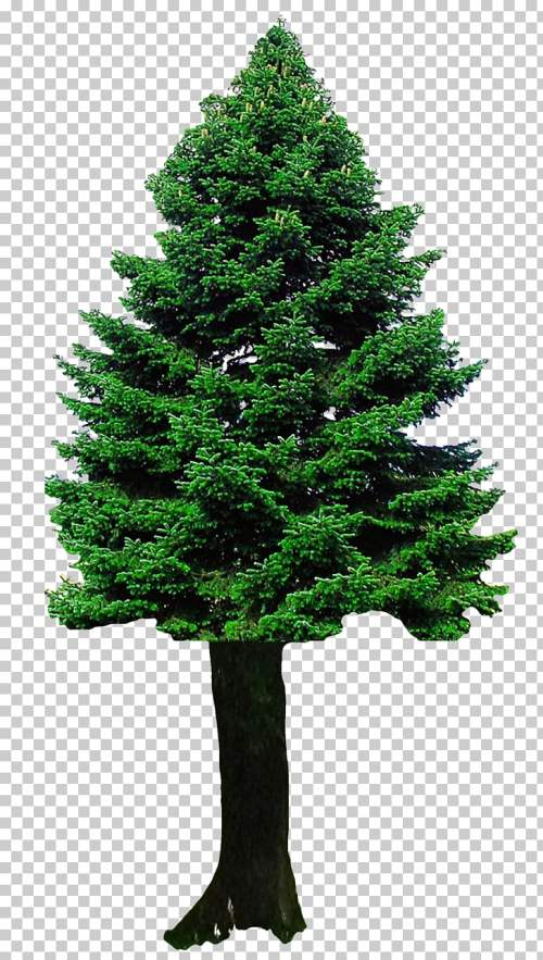 small resolution of christmas tree christmas tree png clipart