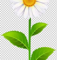 north carolina state senate district 40 wikia marguerite white daisy flower png clipart [ 728 x 1304 Pixel ]