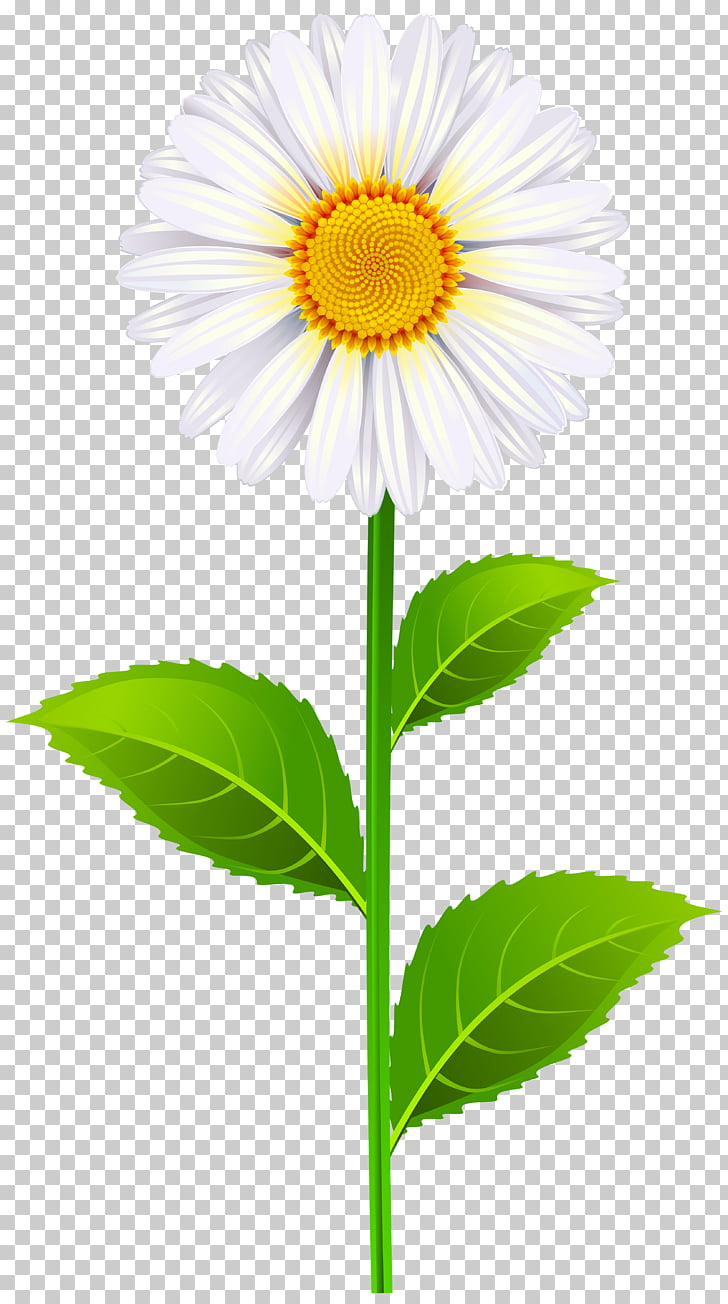 hight resolution of north carolina state senate district 40 wikia marguerite white daisy flower png clipart