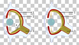 human eye diagram blind spot 1996 7 3 powerstroke glow plug relay wiring page 6 204 png cliparts for free download uihere octopus cephalopod blank clipart