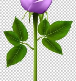 purple rose purple rose transparent purple flower png clipart [ 728 x 1411 Pixel ]