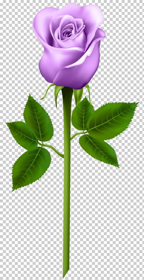 small resolution of purple rose purple rose transparent purple flower png clipart