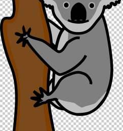 koala american black bear giant panda polar bear koala png clipart [ 728 x 1186 Pixel ]