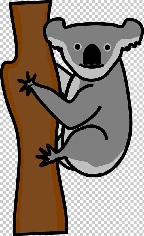 small resolution of koala american black bear giant panda polar bear koala png clipart