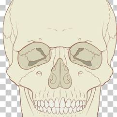 Axial Skeleton Skull Diagram Typical Hoa Wiring 178 Png Cliparts For Free Download Uihere Anatomy Human Body Medicine Clipart