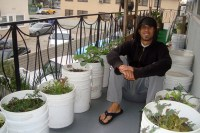 Container Gardening For Urban Apartment Dwellers