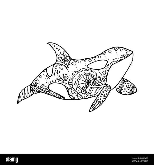 Vector illustration of hand drawn patterned killer whale. Doodle