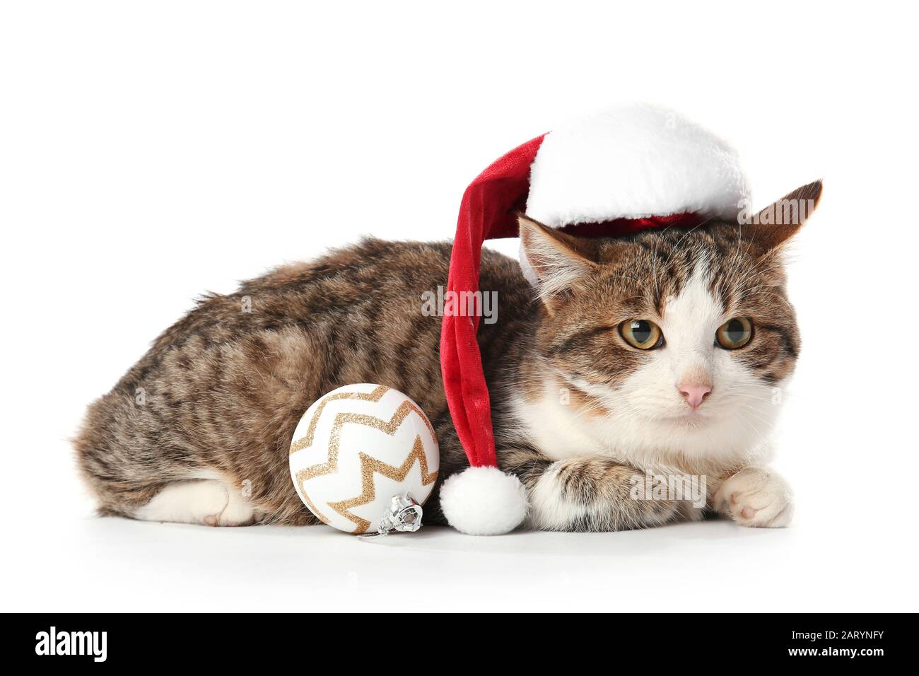Funny Cat White Background