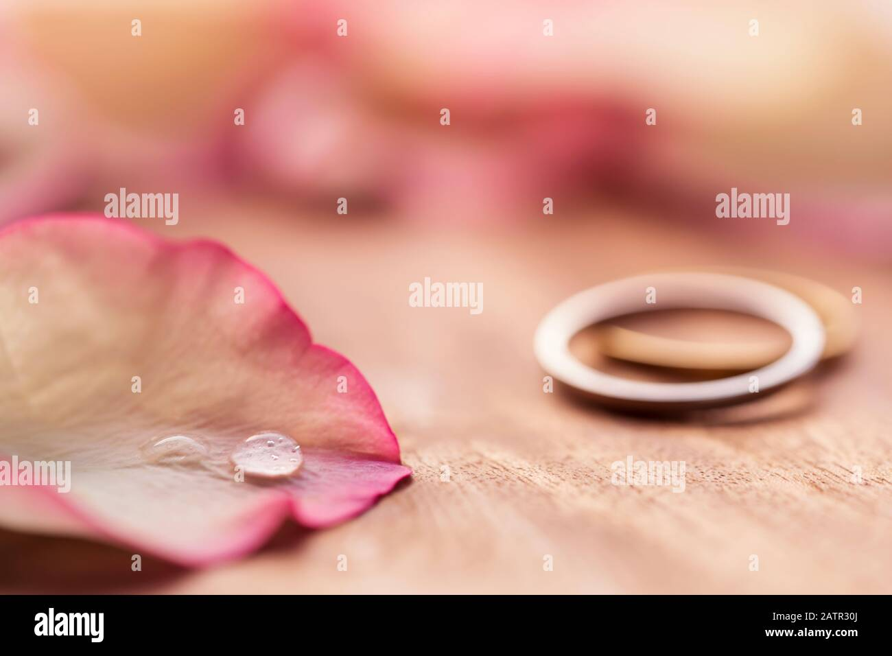 https www alamy com valentines day proposal rings for wedding anniversary engagement background close up of water drop on pink rose petal for invitation card post image342256002 html