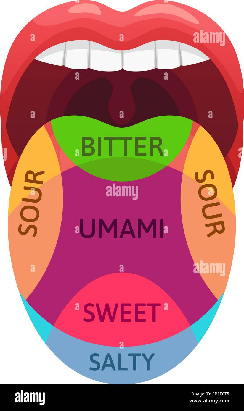 Labelled Diagram Of Tongue : labelled, diagram, tongue, Tongue, Taste, Resolution, Stock, Photography, Images, Alamy