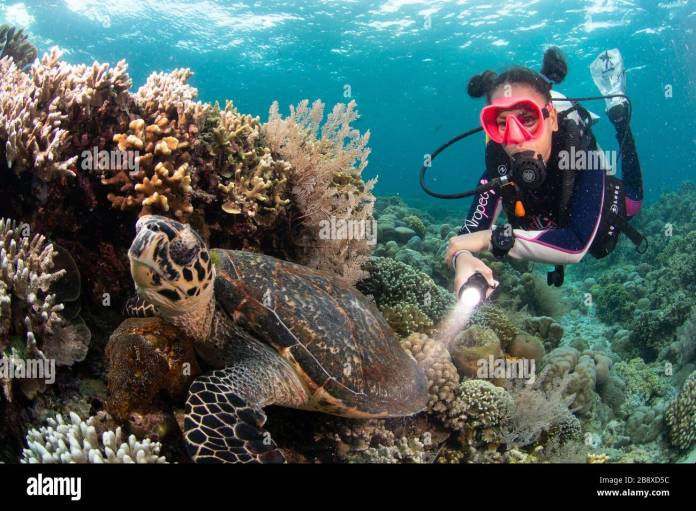 Didi With Green Turtle Bunaken Oasis Dive Resort Manado N Sulawasia Indonesia Stock Photo Alamy