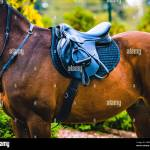 Black Horse Leather Saddle Black Saddle Blanket And Stirrups With Dark Straps Dressed On The Horse Stock Photo Alamy