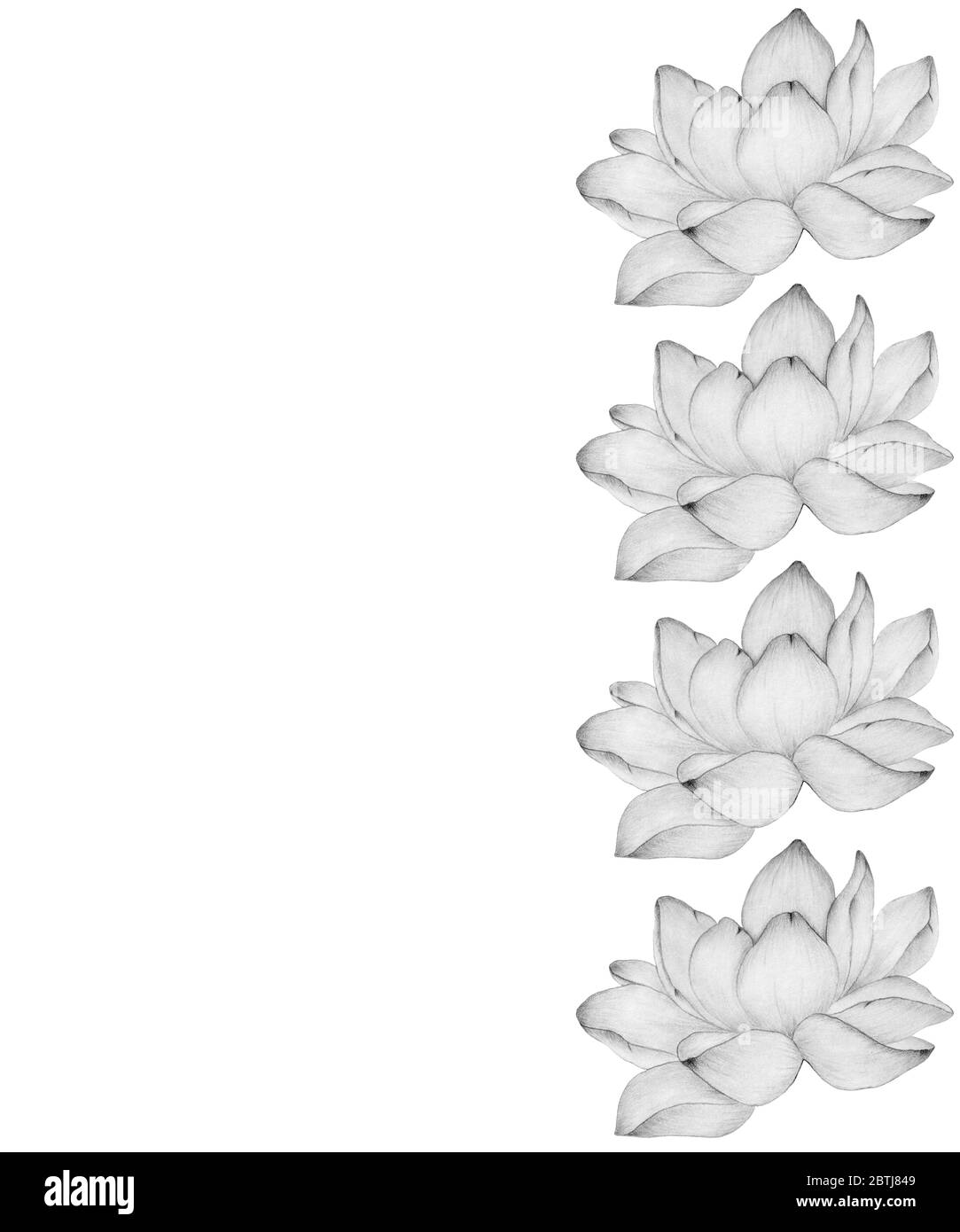 Realistic Lotus Drawing : realistic, lotus, drawing, Frame, Monochrome, Lotus, Flower, Space,, Floral, Decoration, Blooming, Water, Flowers,, Realistic, Pencil, Drawing, Illustration, Stock, Photo, Alamy