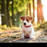 A Small White Dog Puppy Breed Jack Russel Terrier With Beautiful Eyes In Sunny Park With Old Trees Dogs And Pet Photography Stock Photo Alamy