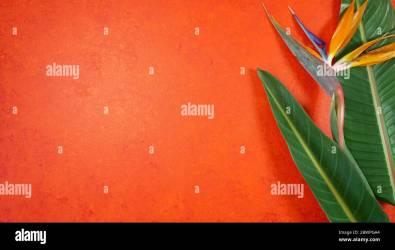 Orange aesthetic tropical theme minimilism creative layout stylish background with bird of paradise flowers and leaves on an orange textured backgroun Stock Photo Alamy