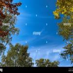 Autumn Forest And Blue Sky In A Sunny Day Red And Yellow Trees Autumn Rowan Templates For Quotes Stock Photo Alamy