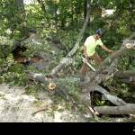 Tree Falls On House High Resolution Stock Photography And Images Alamy