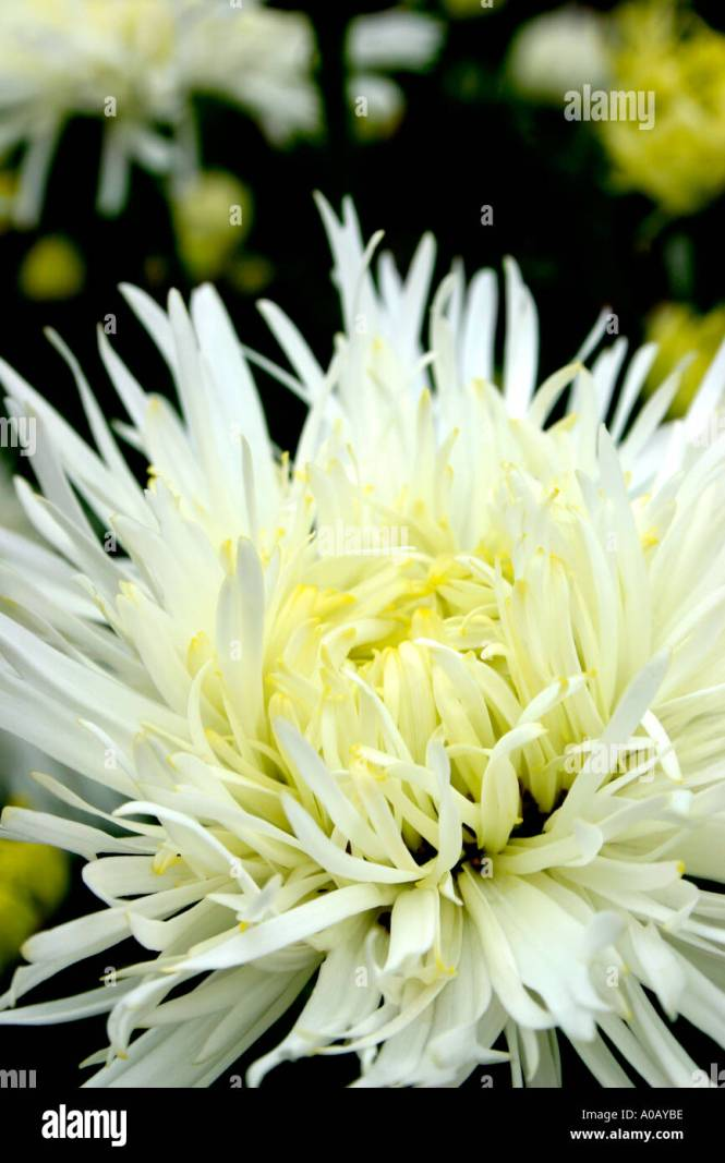 Yellow and white flowers names gallery flower decoration ideas yellow and white flowers names gallery flower decoration ideas white flowers names and images choice image mightylinksfo Image collections