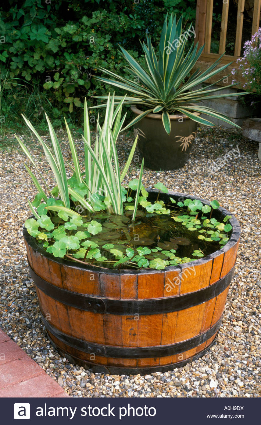 Plants Water Shallow Pond