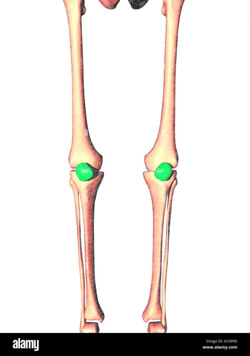 small resolution of illustration of patella highlighted on legs stock image