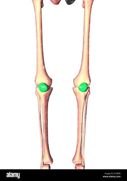 small resolution of illustration of patella highlighted on legs