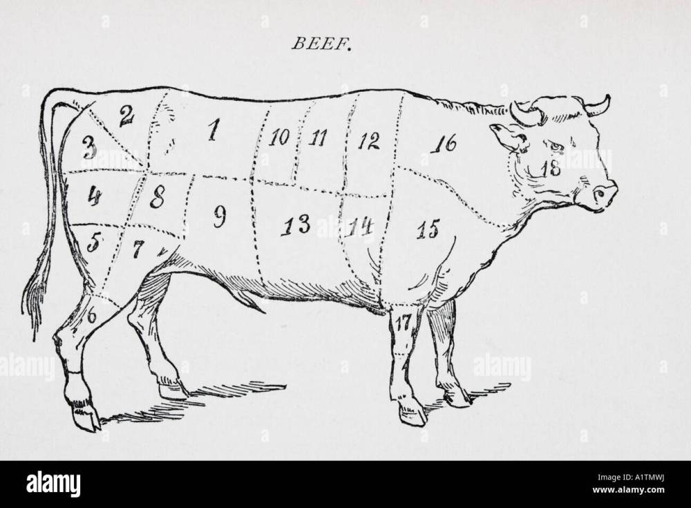 medium resolution of drawing of bullock marked to show 18 different cuts of meat stock image