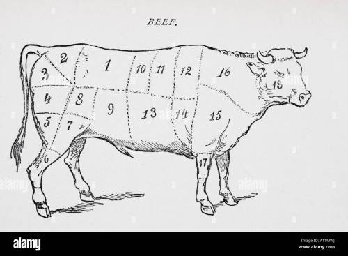 small resolution of drawing of bullock marked to show 18 different cuts of meat stock image