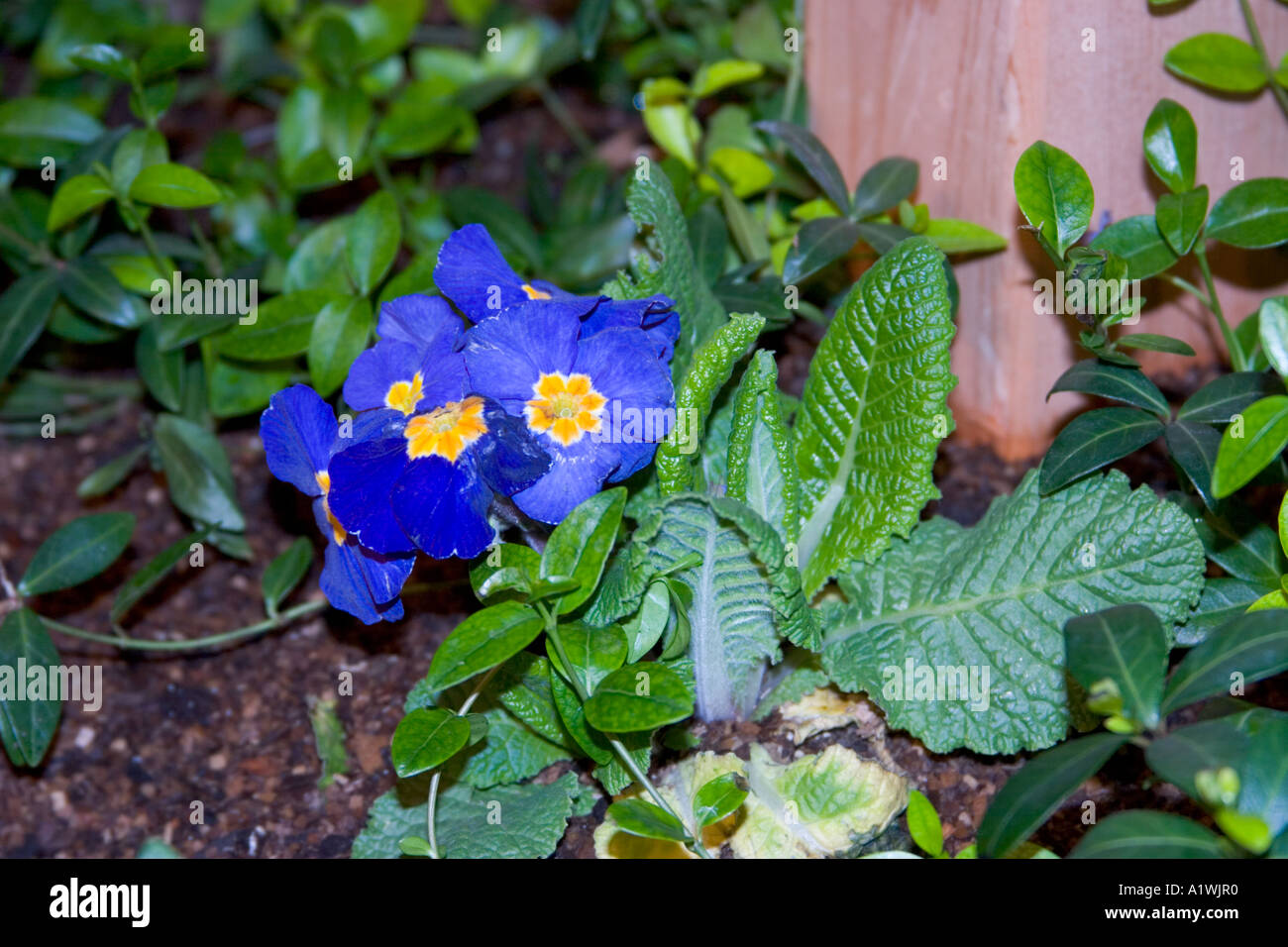 blue flowers with blue