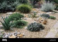 Gravel Garden grasses salvia drought tolerant plants dry ...