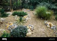 Gravel Garden grasses salvia drought tolerant plants Stock ...