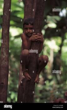 Boy Climbing Tree Barefoot Stock &