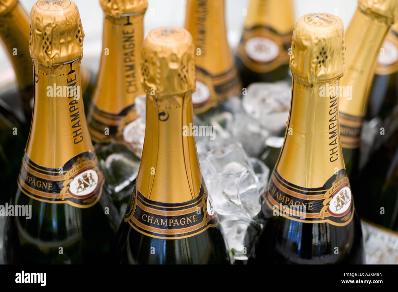 CHAMPAGNE BOTTLES IN ICE BUCKET READY FOR A CELEBRATION