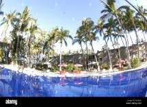 Swimming Pool Palm Trees