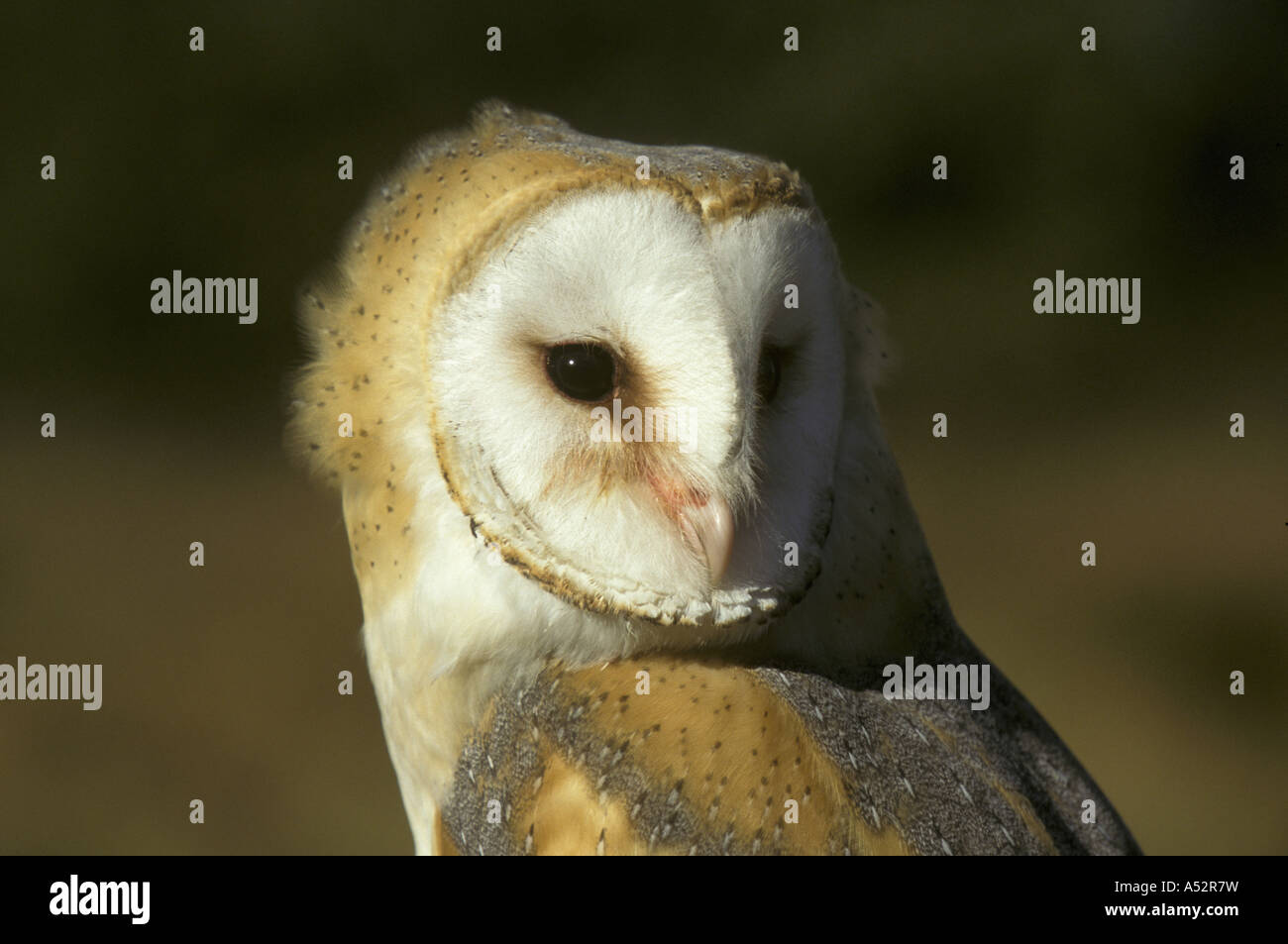 Owl Mask Africa High Resolution Stock Photography And Images Alamy