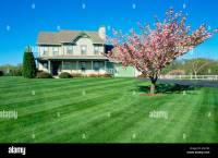 Flowering tree in large front yard of two story frame ...
