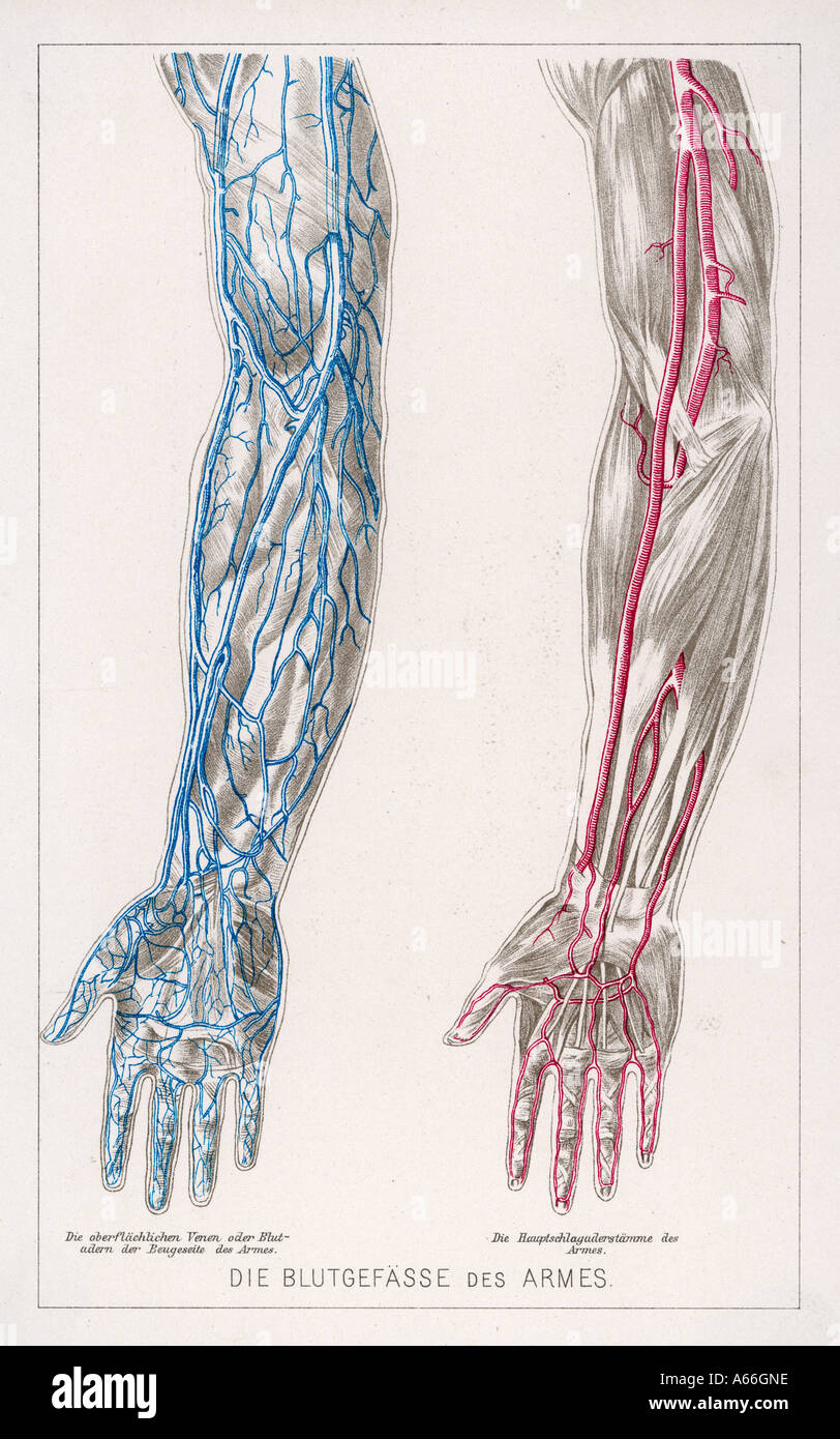 hight resolution of blood circulation arms
