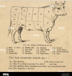 ox cuts diagram [ 1272 x 1390 Pixel ]