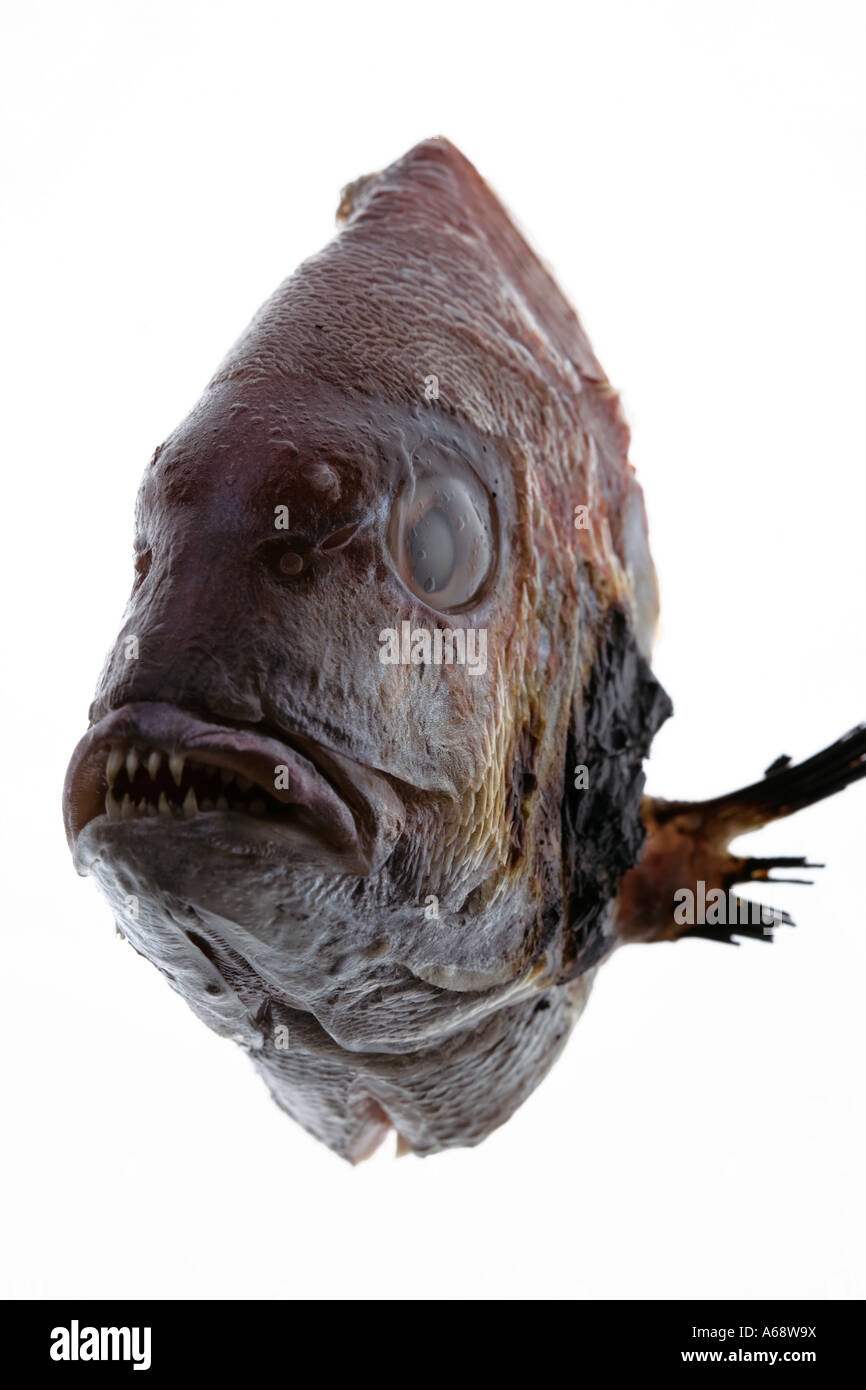 Fish Front View : front, Front, Stock, Photo, Alamy