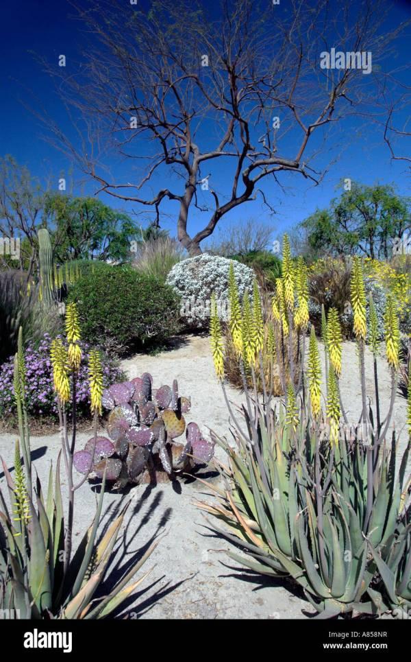 desert landscaping medical