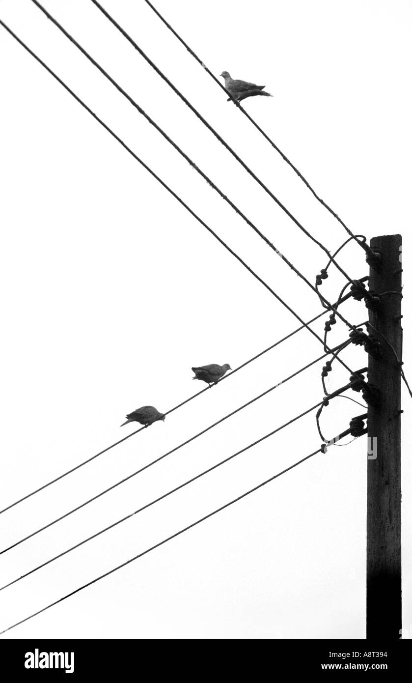 hight resolution of telegraph wires stock photos telegraph wires stock rj11 wiring phone line basic telephone wiring diagram