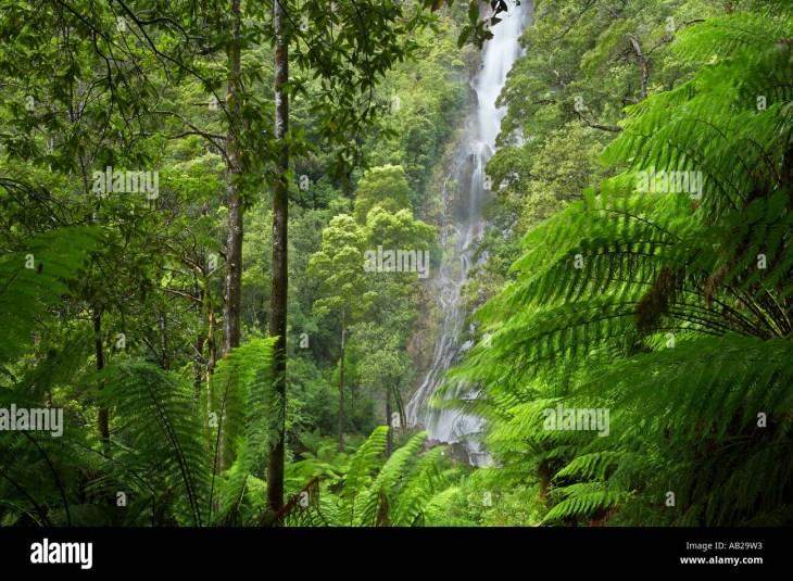 Montezuma Falls a temperate rainforest waterfall nr Rosebery western region  of Tasmania Australia