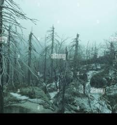 acid rain kills spruce forest europe stock image [ 1300 x 946 Pixel ]