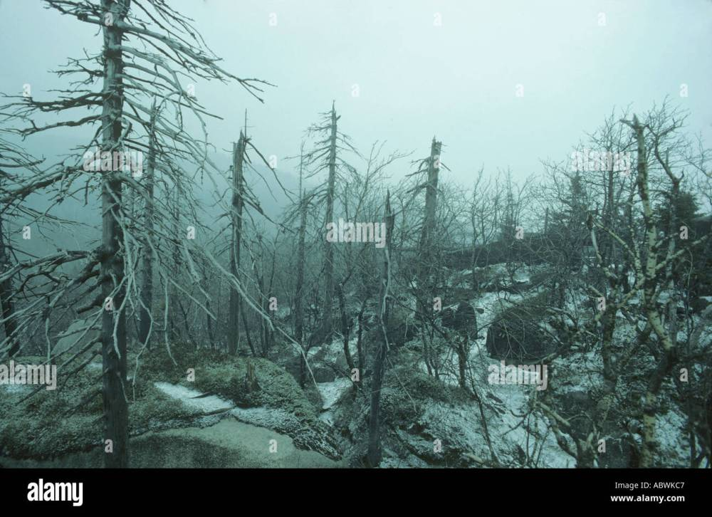 medium resolution of acid rain kills spruce forest europe stock image