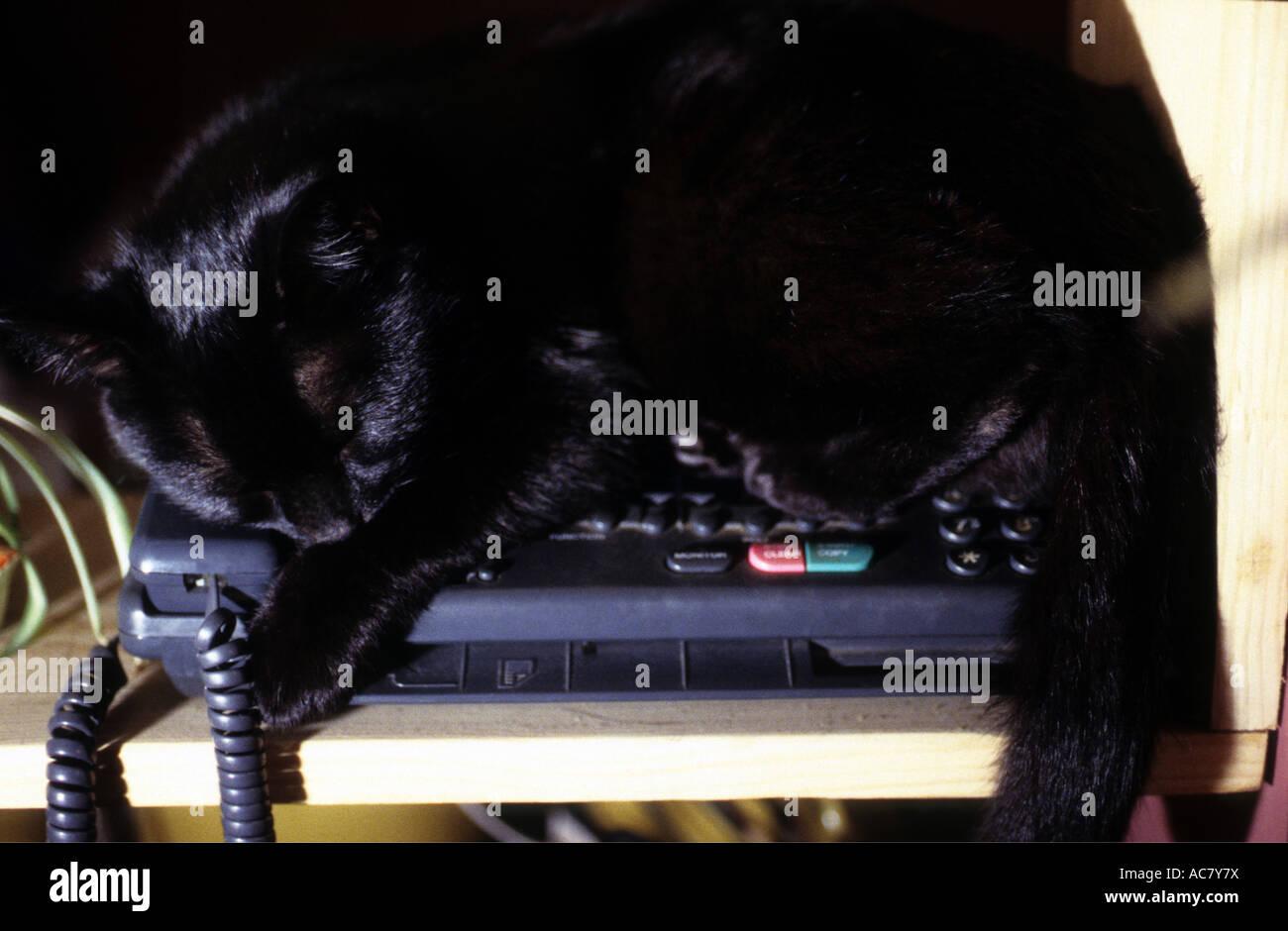 pet cat sleeping on