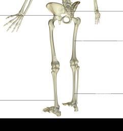 the bones of the lower body stock image [ 1300 x 931 Pixel ]