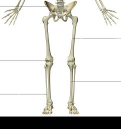 the bones of the lower body [ 1300 x 931 Pixel ]