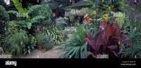 View of Will Giles Exotic Garden in Norwich, UK Stock ...